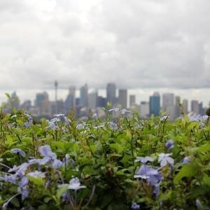 australia_sydney_cityscape_web
