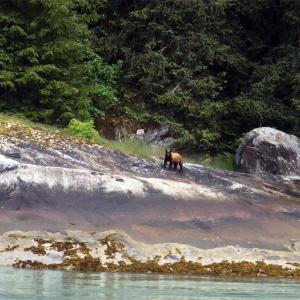 tracyarmfjord_bear_webready